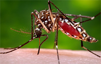 Mosquito Control - Misting Systems
