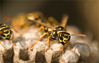 Wasp Control - Misting Systems